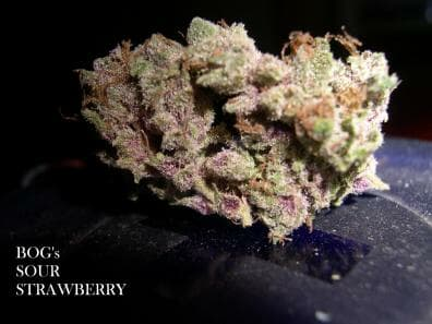 Sour Strawberry (Strawberry Kush clone only x BOG Sour Bubble) 13 Regular Seeds