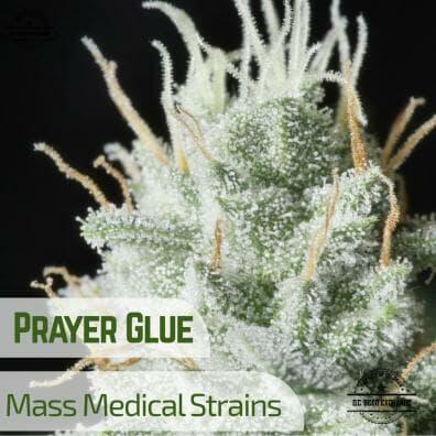 Prayer Glue (GG4 x Prayer Tower Sativa 9) 12 Regular Seeds