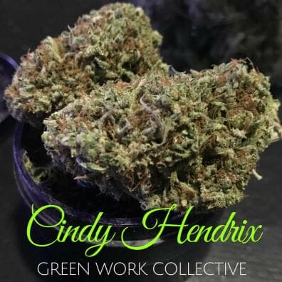 Cindy Hendrix (F4 Yeti x F5 C99) 7 Regular Seeds