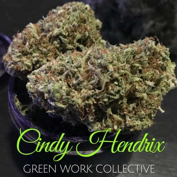 Cindy Hendrix (F4 Yeti x F5 C99) 7 Regular Seeds