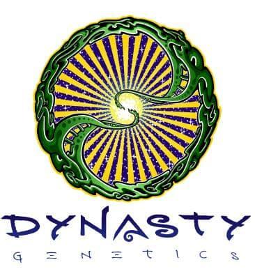 Dynasty Genetics