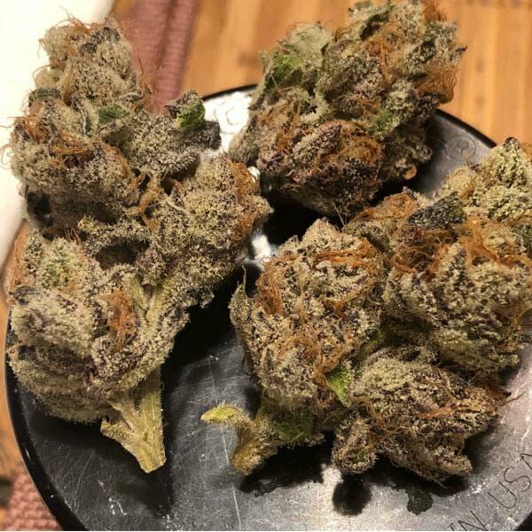 Tropicanna Punch (Purple Punch x Tropicanna Cookies) 12 Regular Seeds