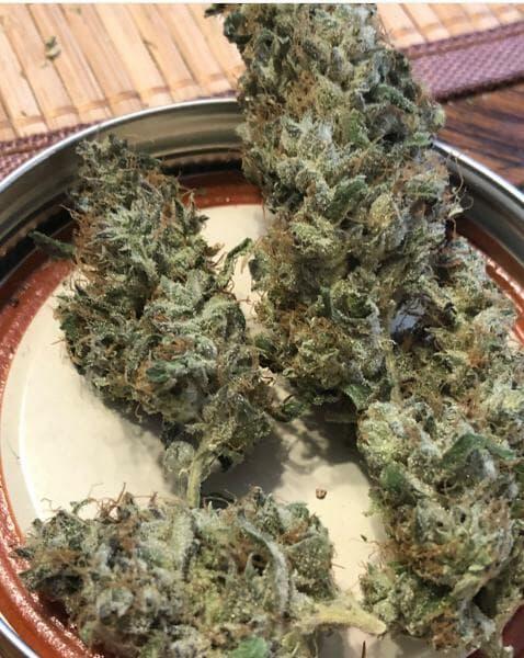Tropicanna Haze ([91 chem x Tom Hill Haze] x Tropicanna Cookies) 12 Regular Seeds