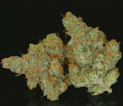 Huckleberry Meringue (Ice Queen x Oregon Huckleberry #5) 10 Regular Seeds