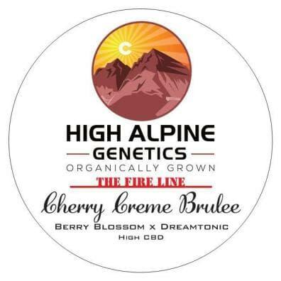 Cherry Creme Brulee (Berry Blossom x Dream Tonic) 10 Regular High CBD Seeds
