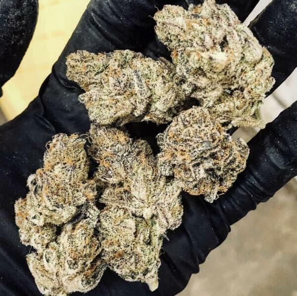 Tropicanna Kush (OG Kush x Tropicanna Cookies) 12 Regular Seeds