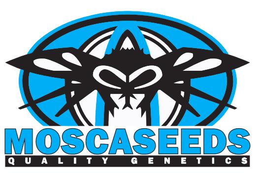 Hyper Drive (Legend OG x Fire Alien White) 12 Regular Seeds