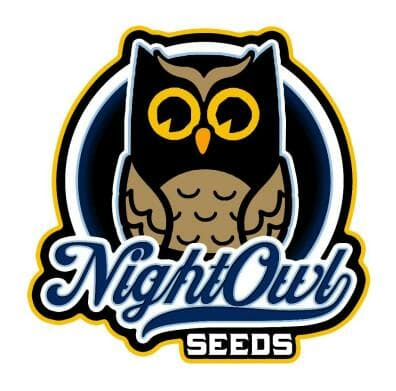 Night Owl Autoflowering Seeds